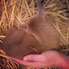 Newborn Kid