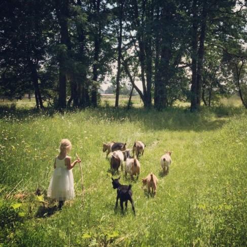 Goat Walk