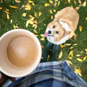 coffee, corgi, autumn
